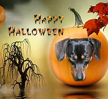 Happy Halloween from my Dachshund Jazz by Photography by TJ Baccari