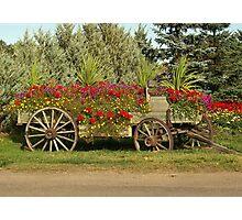 Antique Wagon Flowerbed Photographic Print