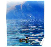 Duck on a mountain lake Poster