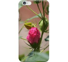 Pink bud-dy iPhone Case/Skin