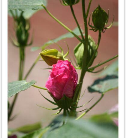 Pink bud-dy Sticker