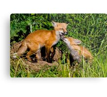 Fox Kits 3 Metal Print