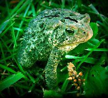 A Funny Little Frog by Linda Miller Gesualdo