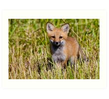 Fox Kit 2 Art Print