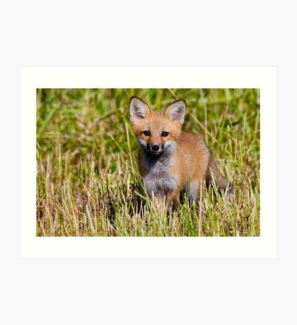 Fox Kit 2 Art Print