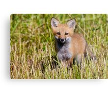 Fox Kit 2 Metal Print