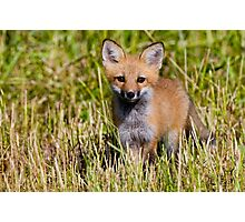 Fox Kit 2 Photographic Print