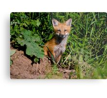 Fox Kit 1 Metal Print