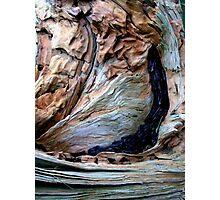 Abstract a non dendrochronology study Photographic Print