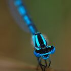 damselfly by chrisdeschepper