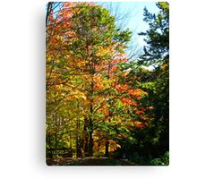 Autumn thoughts on a park bench Canvas Print