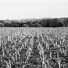 Cornfield by Adam  Barstow