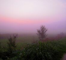 tree in the fog by alicara
