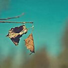 Hanging on by Facenorth