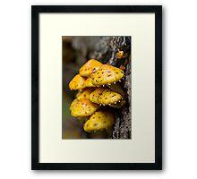 yellow bunch Framed Print