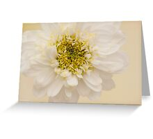 White Mini Chrysanthemum Macro Greeting Card