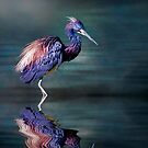 Tricoloured Heron Fishing by Tarrby