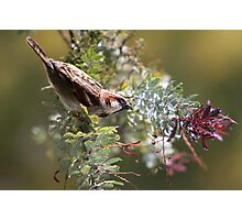 A Sparrow's Life Photographic Print
