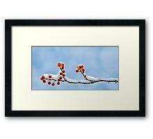 Frozen Berries Framed Print