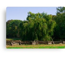 Close Up Willow Tree Canvas Print