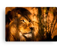 Magestic Pride - Adelaide Zoo Canvas Print