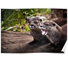 Otters - Adelaide Zoo Poster