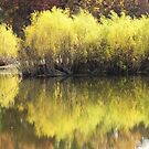 On Golden Pond by lorilee