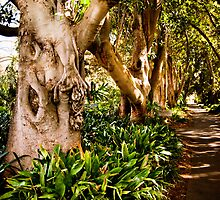 Enchanted Forest - Adelaide Botanical Gardens by Michelle Singleton