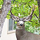 Mr. Buck © by jansnow