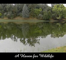 A Haven for Wildlife by FloraBelle