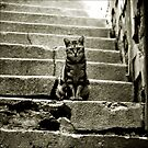 street cat by Metadea