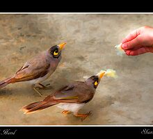 Bird Of Hand by Shannon Rogers