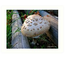 Fungal Infection Art Print