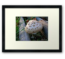 Fungal Infection Framed Print
