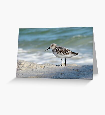 Little Sandpiper Greeting Card