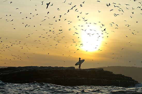 Surfer watches Bird flock by andychiz