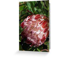 Sundappled Protea Greeting Card