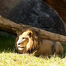 King of the forest! by vasu