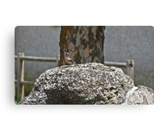 Colored bird on a rock in the countryside Canvas Print