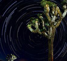Star Trails by Greg Amptman
