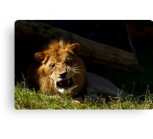 Ferocious Lion! Canvas Print