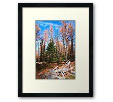 Autumnal woods Framed Print