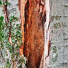 "tree trunk ""series"" by sendao"