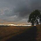 Walk This Way by John Behrends
