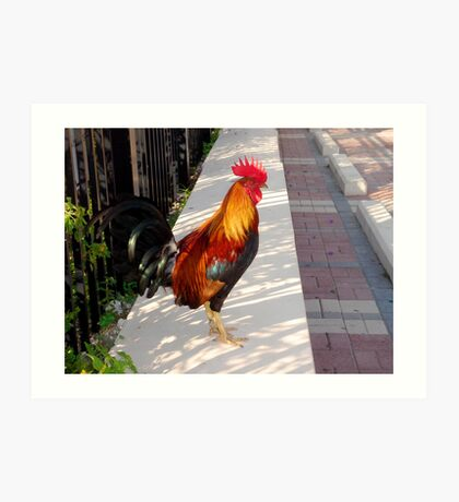 What's about all the Roosters in Key West, Florida Art Print