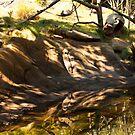Landscape Lemur! by vasu