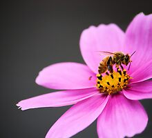 Bee on a Wildflower by Carrie Bonham
