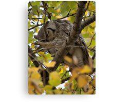 Owl Yoga Canvas Print