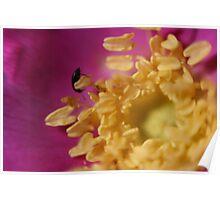 Bug In Rose Poster