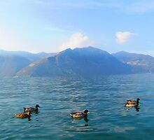 Ducks on a lake in the mountains by alicara